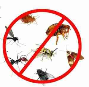 رش مبيدات الحشرات بجدة